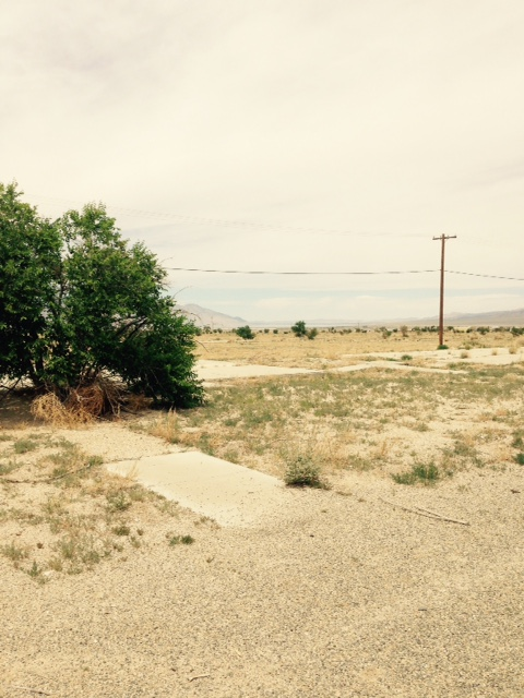 Babbitt home site, with walkway leading to concrete foundation.